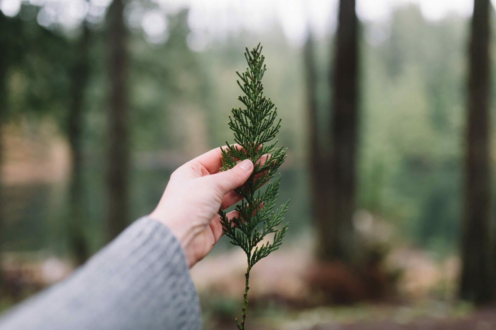 Offsite - Leaf
